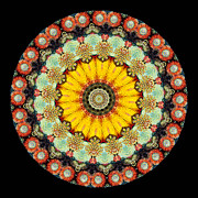 Mandala Metal Prints - Kaleidoscope Ernst Haeckl Sea Life Series Metal Print by Amy Cicconi