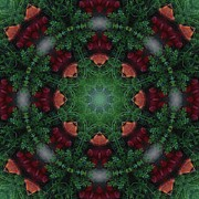 Designs Prints - Kaleidoscope Fire Hydrant Print by Cathy Lindsey