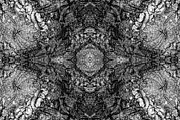 Quad Posters - Kaleidoscope in Wood 2 horizontal Poster by Dawn Currie