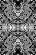 Quad Posters - Kaleidoscope in Wood 8 vertical Poster by Dawn Currie