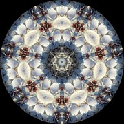 Seashell Art Prints - Kaleidoscope Seashells Print by Cathy Lindsey