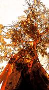 Juan Jose Espinoza - Kaleidoscope Tree