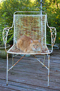 Tabby Cat Photos - Kamo Kat Orange Tabby by Rich Franco
