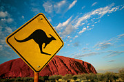 Australian Bush Prints - Kangaroo ayers rock Print by Ron Sumners