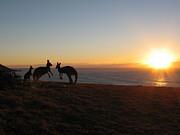 Kangaroo Family Sunset Print by Andrew Garde Joia