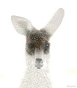 Holly Kempe - Kangaroo
