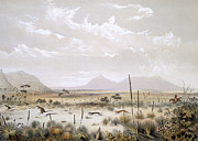 Kangaroo Hunting Near Port Lincoln Print by George French Angas