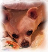 Dog Art Of Chihuahua Posters - Katy Sue Poster by Ruby Cross