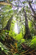 An  Pham - Kauai Wilderness
