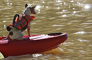 Soccer Dog Design - Kayak Jack
