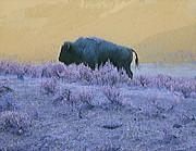 Ann Johndro-Collins - Keeper of the Prairie