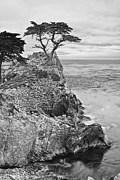 Jamie Pham - Keeping watch - famous Lone Cypress tree at Pebble Beach in Monterey California in Black and White