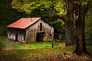 Barn Boards Prints - Kentucky Barn Print by Lena Auxier