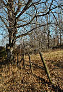 Barbed Wire Fences Photos - Kentucky Fence Row by Greg Jackson