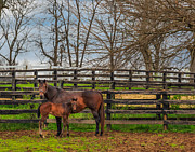 Mark Steven Perry - Kentucky mare and foal