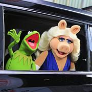 Nina Prommer - Kermit takes Miss Piggy...