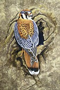 Amate Bark Paper Prints - Kestrel Nesting Print by Anne Shoemaker-Magdaleno