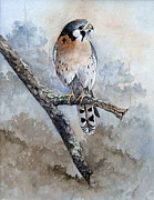 Mary McCullah - Kestrel Perch