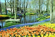 Amsterdam Market Framed Prints - Keukenhof Gardens  Framed Print by Allen Beatty
