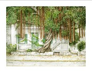 Key West Paintings - Key West Banyan by Bob  George