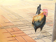 Tiles Drawings - Key West Rooster by John Meyers