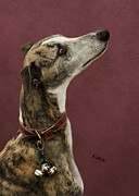 Greyhound Photos - Kiera by Linsey Williams