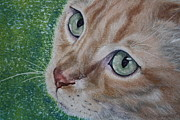 Pet Portraits Pastels - Kiko by Linda Eversole