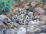 Eggs Pastels - Killdeer Nest by Lori Brackett