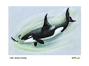Whale Pastels Framed Prints - Killer Whale Feeding Framed Print by Art  MacKay