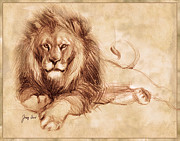 Lion Prints - King at Rest Print by Tracy Herrmann