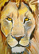 African Lion Painting Framed Prints - King Framed Print by Debi Pople