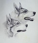 Huskies Drawings Prints - King Dogs Print by Joey Nash