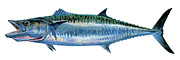 Bull Shark Paintings - King Mackerel by Carey Chen