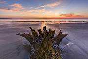 Tree Roots Photo Prints - King Neptune Print by Debra and Dave Vanderlaan
