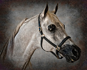 Forelock Photos - King of the Desert by Jak of Arts Photography