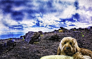 Goldendoodle Prints - King of the Mountain Print by Madeline Ellis