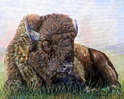 American Bison Originals - King of the Plains by Amanda  Stewart