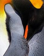 Ramona Johnston - King Penguin