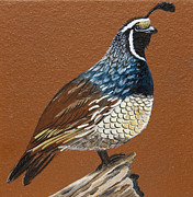California Quail Paintings - King Quail by Jennifer Lake