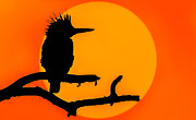 Eventide Prints - Kingfisher Sunset Print by Brian Stevens