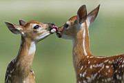 Rhonda McClure - Kisses