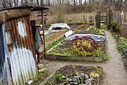 Aleksandr Volkov - Kitchen garden of the...