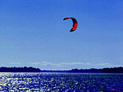Summer Along The Canal Paintings - Kite Boarding The Wind Swept Waters Of The St Lawrence Quebec Seascape Scenes Carole Spandau by Carole Spandau