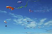 Greg Amptman - Kites