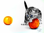 Cute Kitten Drawings Prints - Kitten and Oranges Print by Desire Doecette