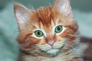 Gregory Dean - Kitten