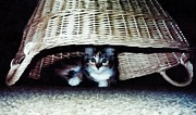 Basket Photos - Kitten in a Basket by Marsha Heiken