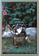 Patricia Keller Framed Prints - Kitten in a Canvas Bag Framed Print by Patricia Keller