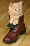 Cute Kitten Digital Art Posters - Kitten in Shoe CK181 Poster by Greg Cuddiford
