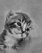 Terri Waters Posters - Kitten Just For You Poster by Terri  Waters